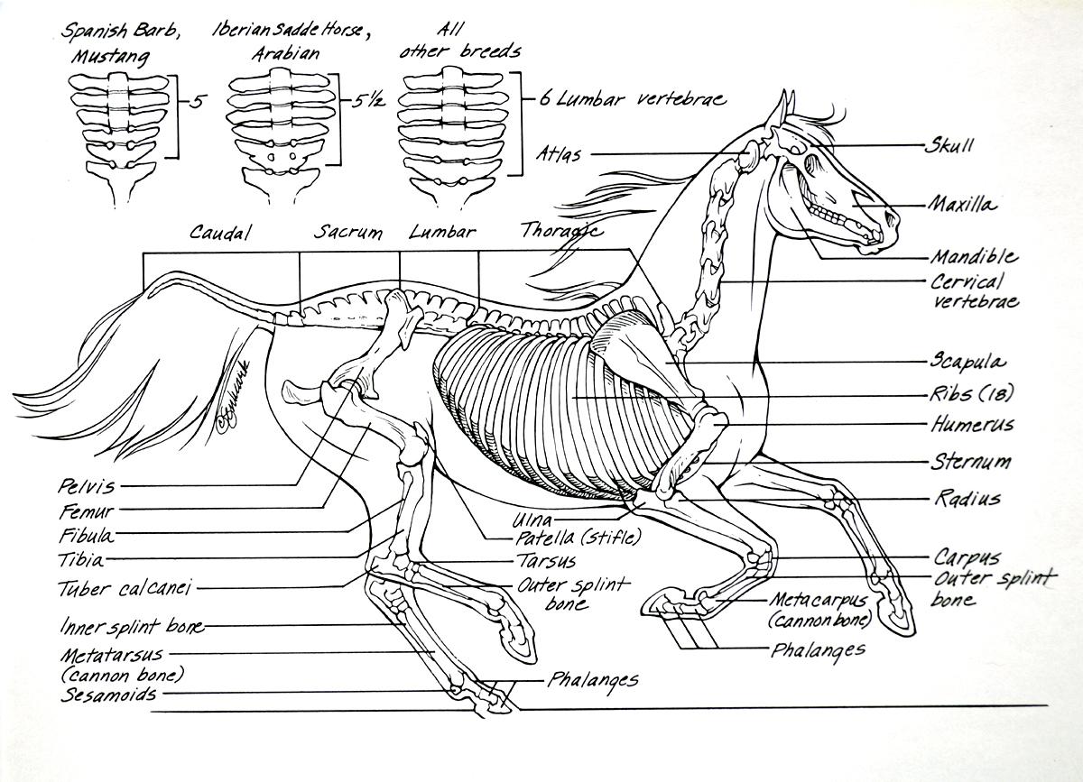 Equi-tape kinesiotape Fisioequina equinos caballos | Guia Equina